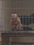 UF Monkey